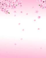 桃の花 02413000006| 写真素材・ストックフォト・画像・イラスト素材|アマナイメージズ