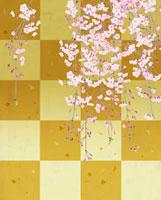金屏風バックの枝垂れ桜
