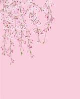 ピンク地の枝垂れ桜