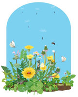 タンポポと綿毛と蝶々とミツバチ 02413000024| 写真素材・ストックフォト・画像・イラスト素材|アマナイメージズ