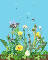 タンポポと綿毛と蝶々とミツバチ