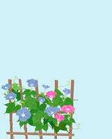 垣根にブルーとピンク朝顔