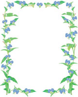 露草のフレーム 02413000047| 写真素材・ストックフォト・画像・イラスト素材|アマナイメージズ