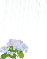 雨に紫陽花 02413000050| 写真素材・ストックフォト・画像・イラスト素材|アマナイメージズ