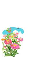 百日草 02413000051| 写真素材・ストックフォト・画像・イラスト素材|アマナイメージズ
