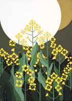 菜の花と満月