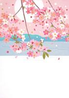 海辺の桜と満月