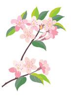 桜の花と葉