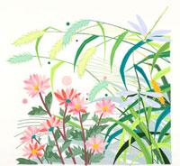 秋草 02422000030| 写真素材・ストックフォト・画像・イラスト素材|アマナイメージズ