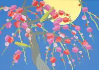 紅梅 春 02422000129| 写真素材・ストックフォト・画像・イラスト素材|アマナイメージズ