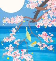 夜桜 春 02422000148| 写真素材・ストックフォト・画像・イラスト素材|アマナイメージズ