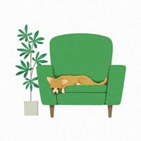 グリーンのソファーに寝そべるチワワ