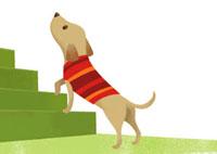 服を着た犬と階段