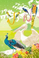 カラフルな鳥とクジャクとペリカン