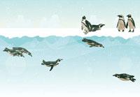 氷の上で休むペンギンと水の中を泳ぐペンギン