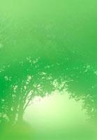 緑の森のトンネルと光