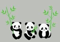 3匹の子パンダのコラージュ