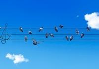 五線譜の電線にとまった鳩