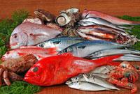 魚介集合 02428000012| 写真素材・ストックフォト・画像・イラスト素材|アマナイメージズ