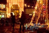 神戸市立布引ハーブ園のクリスマス 02431000032| 写真素材・ストックフォト・画像・イラスト素材|アマナイメージズ