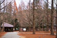 神戸市立森林植物園 02431000092| 写真素材・ストックフォト・画像・イラスト素材|アマナイメージズ