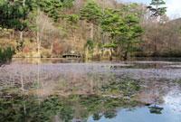 神戸市立森林植物園の長谷池 02431000093| 写真素材・ストックフォト・画像・イラスト素材|アマナイメージズ