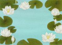 水に浮かぶ睡蓮の花と葉