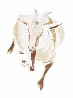 ヤギの寝ている姿 02461000001| 写真素材・ストックフォト・画像・イラスト素材|アマナイメージズ
