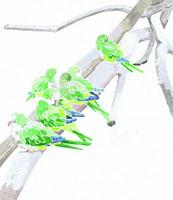 枯木にとまるインコの群れ