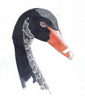 黒鳥の顔 02461000024| 写真素材・ストックフォト・画像・イラスト素材|アマナイメージズ