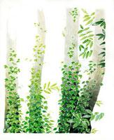 蔦がからまる木々 02461000027| 写真素材・ストックフォト・画像・イラスト素材|アマナイメージズ