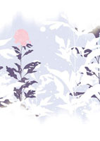 雪と植物 02463000412| 写真素材・ストックフォト・画像・イラスト素材|アマナイメージズ