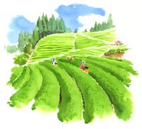 青い大空と大きな畑で働いている人々