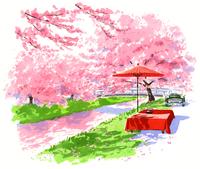 川の上に咲きほこる桜並木