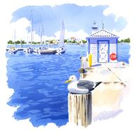 カモメと海に浮かぶヨット 02463001118| 写真素材・ストックフォト・画像・イラスト素材|アマナイメージズ