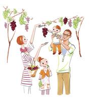 ブドウ狩りをする家族 02463001286| 写真素材・ストックフォト・画像・イラスト素材|アマナイメージズ