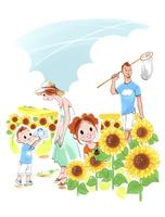 向日葵畑で虫取りをする家族
