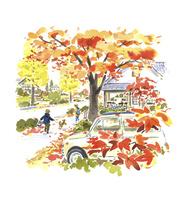 紅葉の綺麗な街路樹 02463001581| 写真素材・ストックフォト・画像・イラスト素材|アマナイメージズ