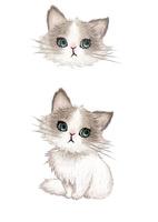 子ネコの顔と全身