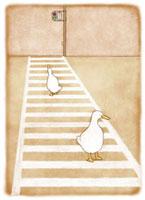 横断歩道を渡るアヒル2羽