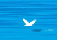海岸を弾くように飛び去る鷲