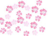桜 02479000095| 写真素材・ストックフォト・画像・イラスト素材|アマナイメージズ