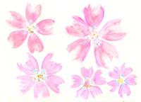 桜 02479000109| 写真素材・ストックフォト・画像・イラスト素材|アマナイメージズ