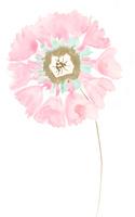 花、 02479000146| 写真素材・ストックフォト・画像・イラスト素材|アマナイメージズ