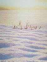 水彩画 極寒の中で 02488000001| 写真素材・ストックフォト・画像・イラスト素材|アマナイメージズ