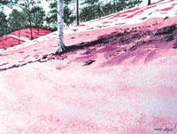水彩画 芝桜