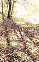水彩画 こもれび 02488000010| 写真素材・ストックフォト・画像・イラスト素材|アマナイメージズ
