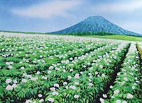 水彩画 羊蹄山と芋畑