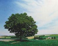水彩画 セブンスターの木