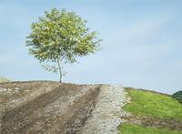 水彩画 1本の木 02488000030| 写真素材・ストックフォト・画像・イラスト素材|アマナイメージズ